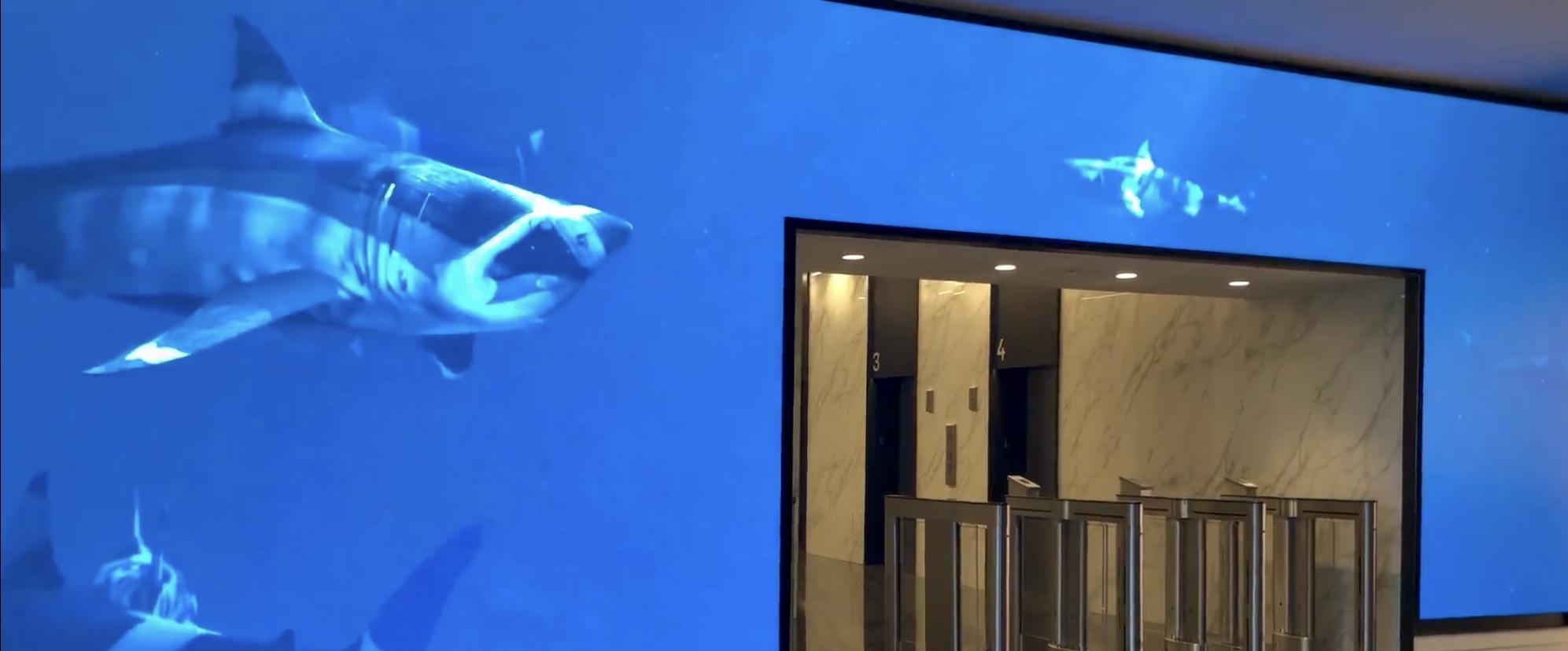 Shark Tank Art Lobby